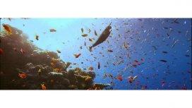 image du programme Oceans en danger : des fonds marins...