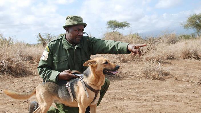 GEO Reportage - Kenya, les chiens au secours des