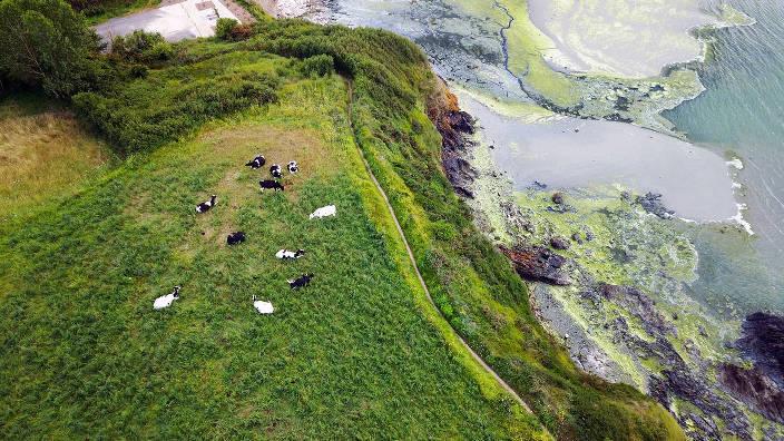 ARTE Regards - Algues vertes, le littoral