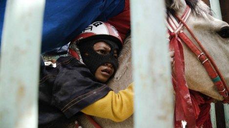 Indonésie - Les enfants jockeys de Sumbawa