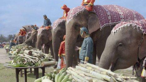 Au pays du million d'éléphants