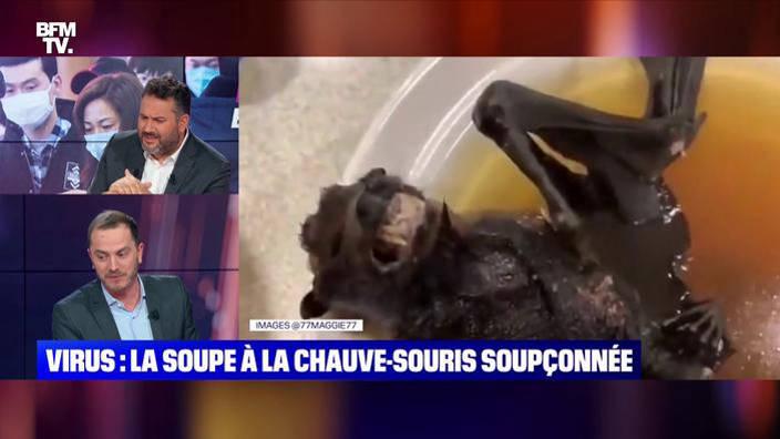 Virus chinois : la soupe à la chauve-souris