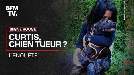 Curtis, chien tueur ? L'enquête