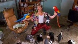 image du programme Ace Ventura, détective pour chiens et chats