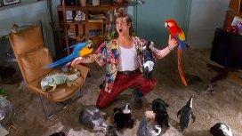 image de la recommandation Ace Ventura, détective pour chiens et chats
