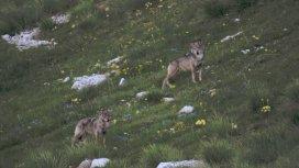 image du programme La vallée des loups