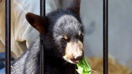 image du programme Winnie, un ourson de légende