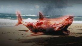 image du programme Atomic Shark