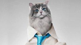 image de la recommandation Ma vie de chat