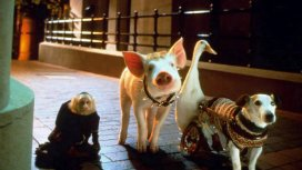 image du programme Babe, le cochon dans la ville