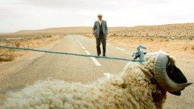 image du programme La laine sur le dos