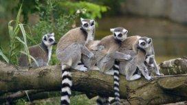image du programme Un zoo à Paris