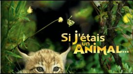 image du programme Si j'étais un animal