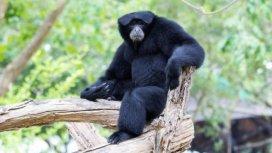 image de la recommandation Une saison au zoo