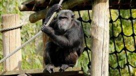 image du programme Les animaux du zoo