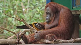 image du programme Caméras espions en terre animale