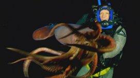image du programme Mission monstres marins