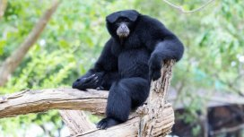 image du programme Une saison au zoo