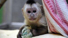 image du programme Zoo nursery Berlin