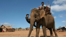 image du programme Les derniers hommes éléphants