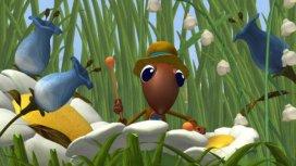 image du programme Drôles de petites bêtes