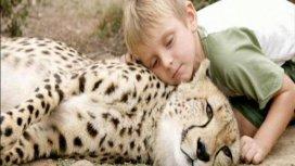 image du programme Complicités animales