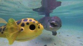 image du programme Espions chez les dauphins et les orques