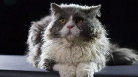 image du programme Histoires de chats