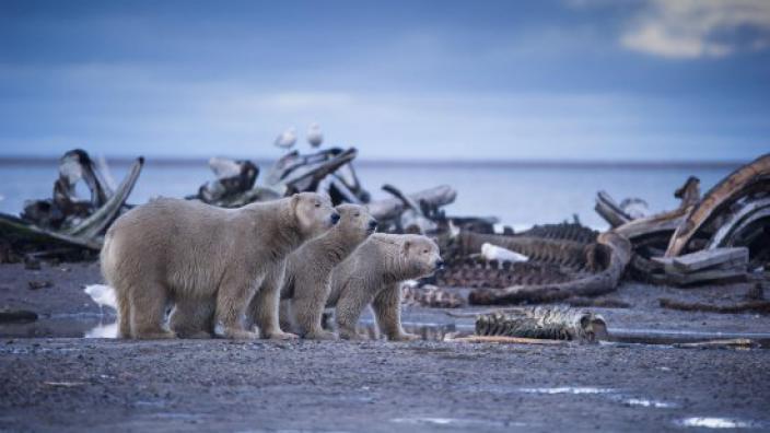 Image du programme Alaska sauvage