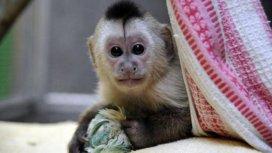 image de la recommandation Zoo nursery Berlin