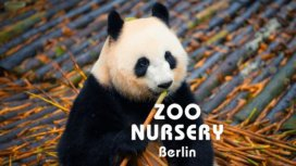 image de la recommandation Zoo nursery Berlin