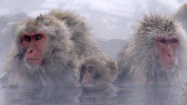image du programme Les mystères de la vie sauvage