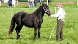 image de la recommandation Dans la peau d'un vétérinaire