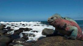 image du programme Galápagos, archipel inattendu