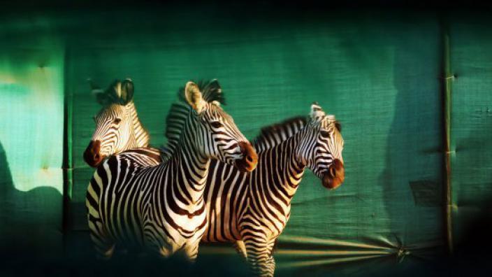 Image du programme Gorongosa, renaissance d'un royaume