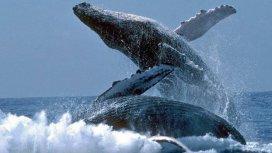 image du programme Voyage avec les baleines à bosse
