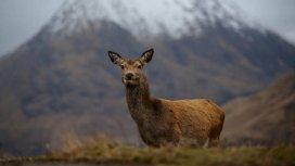 image du programme Les quatre saisons du Loch Lomond