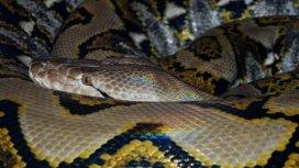 image du programme Les secrets des serpents