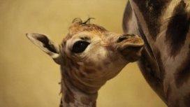 image de la recommandation L'école des bébés animaux