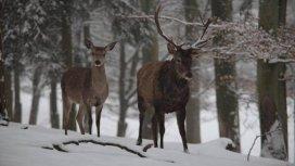 image du programme Au pays des neiges