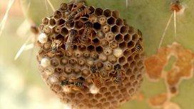 image du programme Les abeilles du mont Kenya