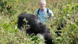 image du programme La famille gorille et moi