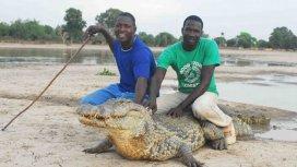 image du programme Le crocodile du Nil après l'eden