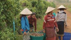 image du programme Laos