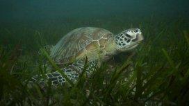 image du programme Les mystères de la Barrière de corail