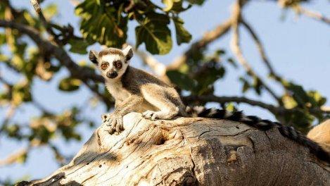 Madagascar : la nature enchantée