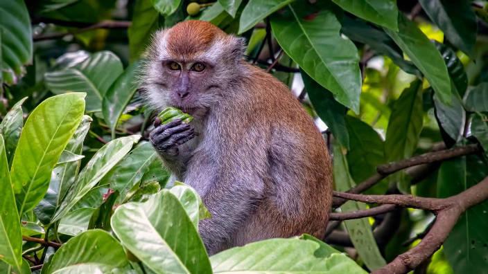 La planète des primates