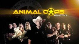 image du programme ANIMAL COPS HOUSTON