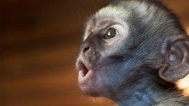 image de la recommandation Le refuge des singes