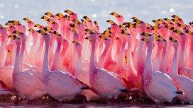 image du programme Destination Wild : Amerique du Sud